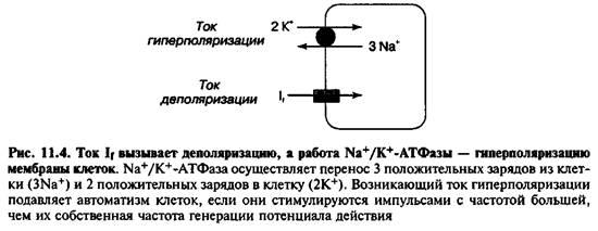 Придушення автоматизму латентних водіїв ритму (overdrive suppresion)