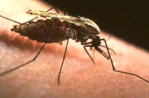 Народне лікування малярії