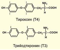 У пошуку Основного ефекту гормонів щитовидної залози