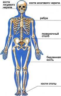 кісткова