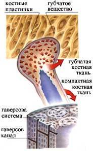 кісткові