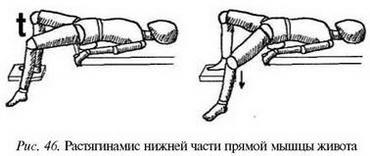 М'язи, що випрямляють тулуб