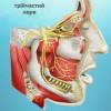 Больові стани, що симулюють зубний біль