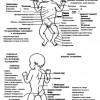 Клінічне обстеження новонародженого