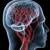 Судини головного мозку