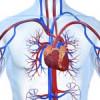 Захворювання периферичних судин