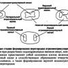 Поділ атріовентрикулярного каналу