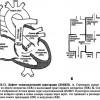 Дефект міжшлуночкової перегородки