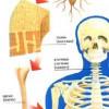 Клітини, тканини, органи, системи і апарати