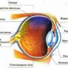 Розріз ока