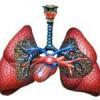 Система органів дихання