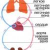 Кров - головний елемент