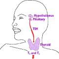 Гіпофіз, ТТГ і щитовидна залоза