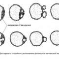 Регенерація (відродження) клітин і фолікулів щитовидної залози