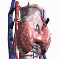 Про лікування щитовидної залози