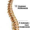 Кістки хребетного стовпа