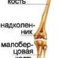 Кістки нижніх кінцівок