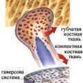 Кісткові тканини