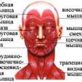 М'язи голови і шиї