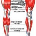 М'язи нижніх кінцівок