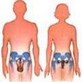 Репродуктивний апарат