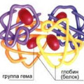 Еритроцити - неживі, але необхідні клітини