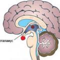 Гомеостаз - механізм виживання