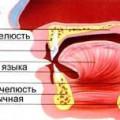 Порожнина рота і глотка