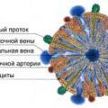 Розумні клітини - гепатоцити