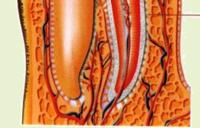 А-дельта нервові волокна