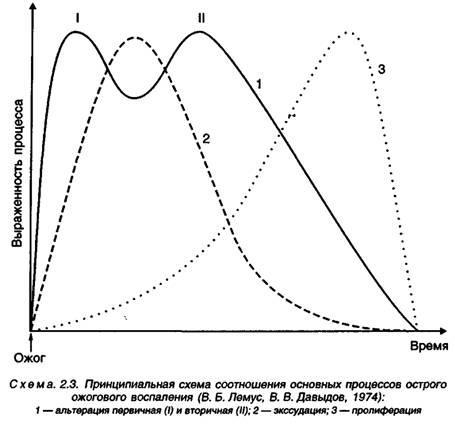 Загоєння опіків як єдиний ланцюг запальної реакції