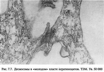 Зберігання та транспортування клаптів шкіри в біотехнологічний центр