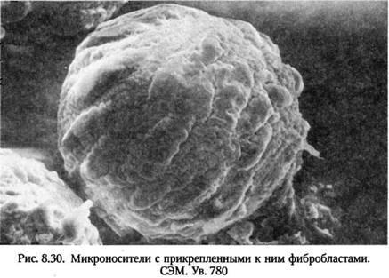 Шляхи вдосконалення методу лікування ран пересадкою вирощених in vitro клітин шкіри