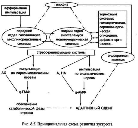 Регуляція метаболічного (стрессорного) відповіді на травму
