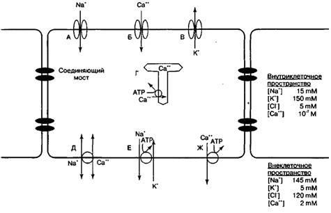 Основи електрофізіології