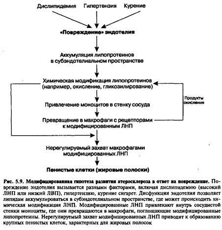 Патогенез атеросклерозу