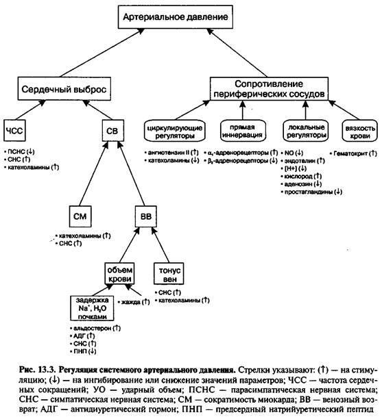 Есенціальна артеріальна гіпертензія