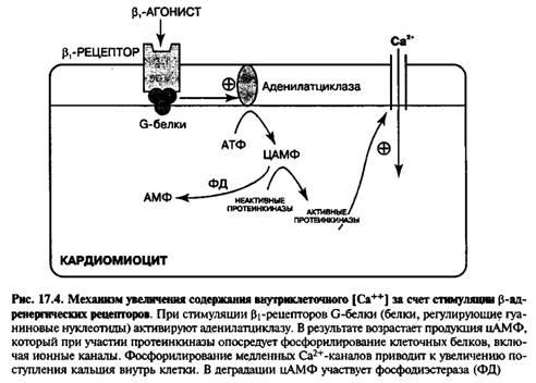 Симпатоміметичні аміни