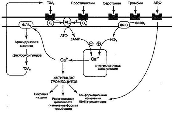 Інгібітори агрегації тромбоцитів