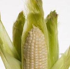 Кукурудзяні рильця для схуднення