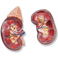Хронічна недостатність кори надниркових залоз
