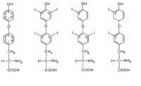 Де приховано Основний ефект гормонів щитовидної залози?