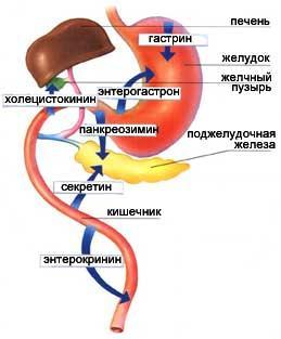 підшлункова