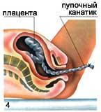 плацента,