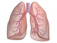 Газообмін в легенях - зовнішнє дихання
