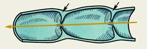 Лімфатичні протоки
