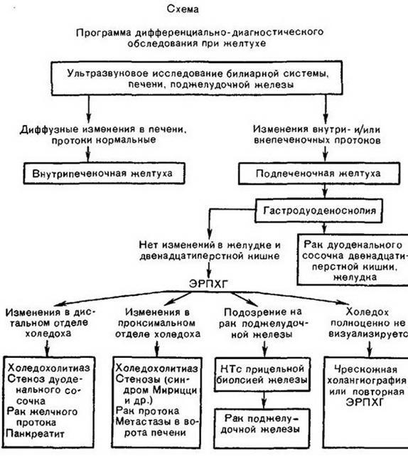 Глава 3. ОСНОВНІ гепатологічного СИНДРОМИ <br> 3.1. ЖОВТЯНИЦЯ