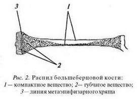 Дещо з анатомії людини